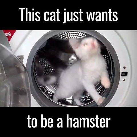 Pisicuta care vrea sa fie hamster in masina de spalat