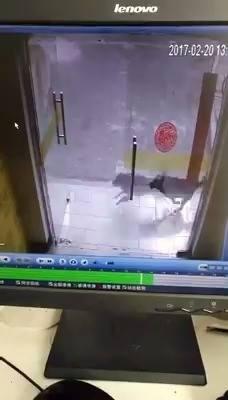 Pisica alergata de caine