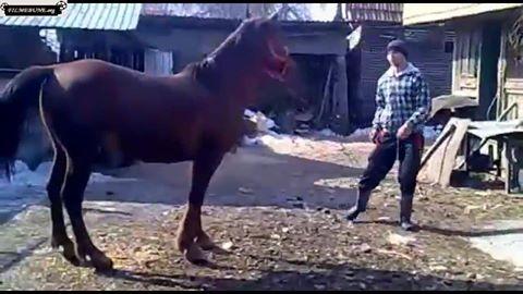 Cel mai prost dresor de cai din lume