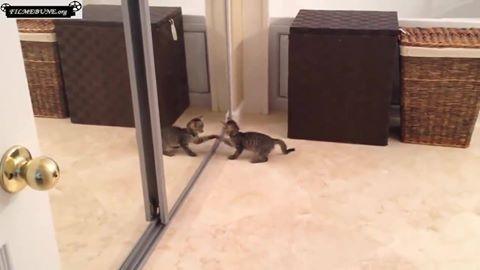 O pisicuta se cearta cu ea in oglinda