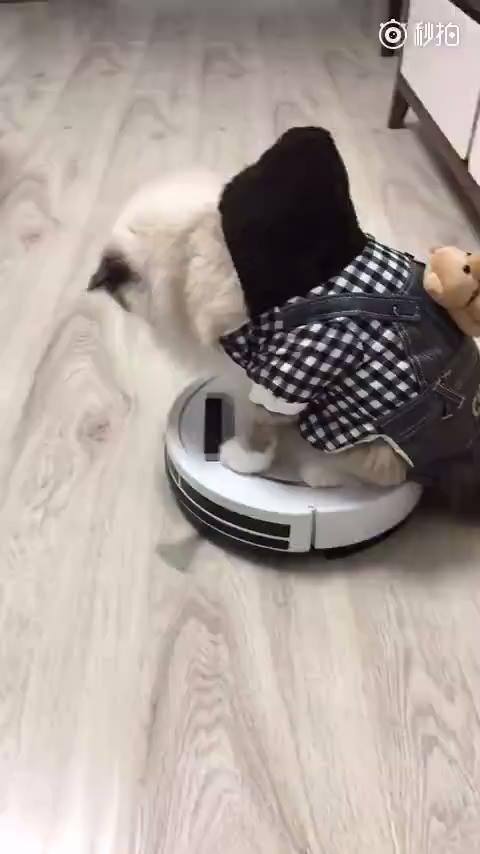 Cea mai lenesa pisica din lume