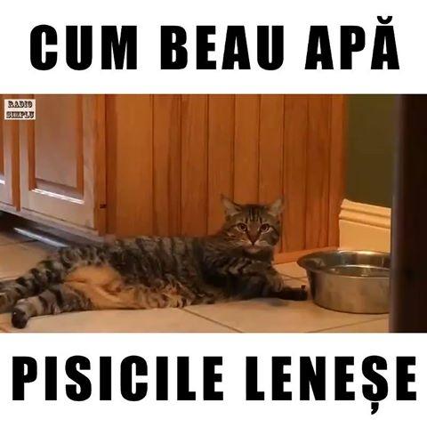 Cum beau apa pisicile lenese